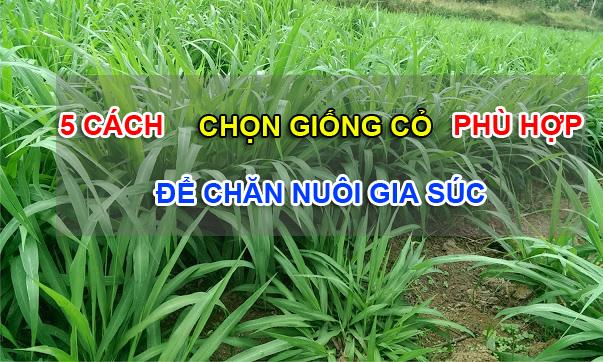 cách chọn giống cỏ