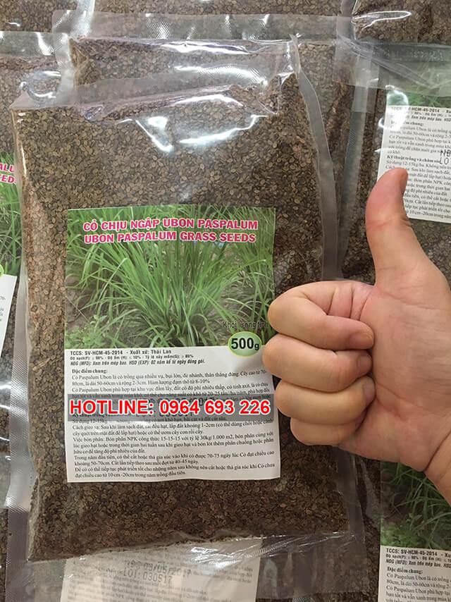 hạt giống cỏ Paspalum