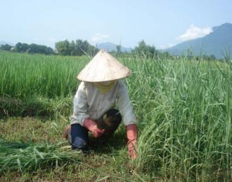 Các loại phân bón tốt cho cỏ chăn nuôi
